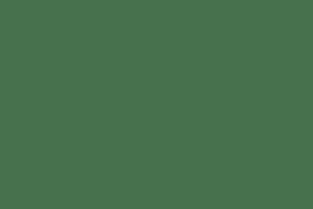 Australasian Barn Owl 06